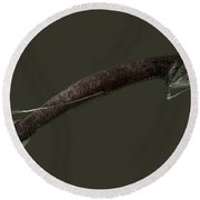 Barbeled Dragonfish Round Beach Towel