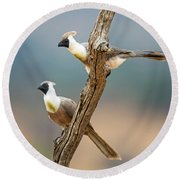 Bare-faced Go-away-birds Corythaixoides Round Beach Towel