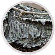 Bark - Lichen - Cat Brier Tendrils Round Beach Towel