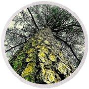 Bark Up The Tall Pine Tree Abstract In Felicina  Louisiana Round Beach Towel