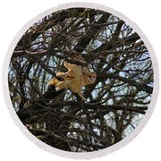 Barn Owl In A Tree Round Beach Towel
