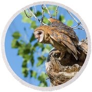 Barn Owl Owlet Climbs Out Of Nest Round Beach Towel