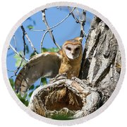 Barn Owl Owlet Stretches Round Beach Towel