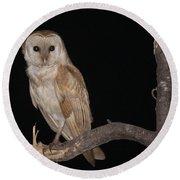 Barn Owl Tyto Alba Round Beach Towel