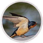 Barn Swallow Round Beach Towel by Byron Varvarigos