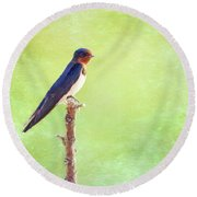 Barn Swallow, Hirundo Rustica Round Beach Towel