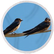 Barn Swallows  Round Beach Towel