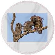 Barred Owl Family Round Beach Towel