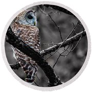 Barred Owl Hungry  Round Beach Towel