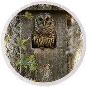 Barred Owl In Nest Box Round Beach Towel