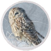 Barred Owl In The Snowstorm Round Beach Towel