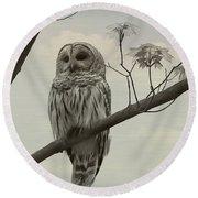 Barred Owl On A Tree Round Beach Towel
