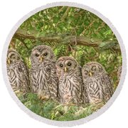 Barred Owlets Nursery Round Beach Towel