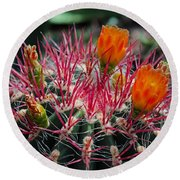 Barrel Cactus II Round Beach Towel