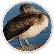 Basking Pelican Round Beach Towel