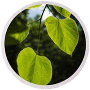 Basswood Leaves Against Dark Forest Background Round Beach Towel