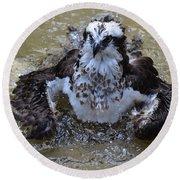 Bathing Osprey In Shallow Water Round Beach Towel