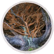Battered Cypress With Orange Alga Round Beach Towel