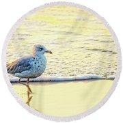 Beach Bird Round Beach Towel