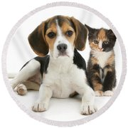 Beagle And Calico Cat Round Beach Towel