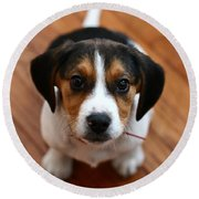 Beagle Round Beach Towel