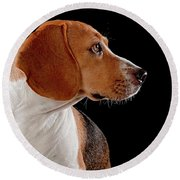 Beagle Round Beach Towel