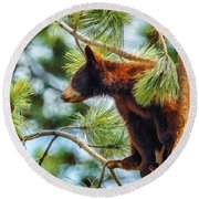 Bear Cub In A Tree 3 Round Beach Towel