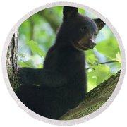Bear Cub In Tree Round Beach Towel
