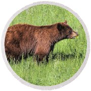 Bear Eating Daisies Round Beach Towel