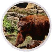 Bear Pacing Round Beach Towel