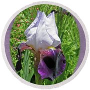 Bearded Iris Blossom Round Beach Towel
