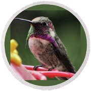 Beautiful Anna's Hummingbird On Perch Round Beach Towel