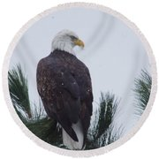 Beautiful Bald Eagle Round Beach Towel