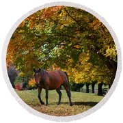Beautiful Bay Horse In Fall Round Beach Towel
