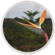 Beautiful Bird Of Paradise Flower In A Tropical Garden  Round Beach Towel