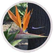 Beautiful Bird Of Paradise Flower In Full Bloom  Round Beach Towel