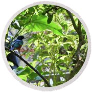 Beautiful Bird Perched In A Tree Round Beach Towel
