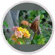 Beautiful Black Swallowtail Butterfly Round Beach Towel