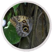 Beautiful Brown Morpho Butterfly In A Lush Garden  Round Beach Towel