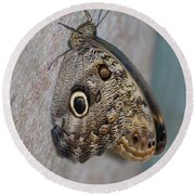 Beautiful Brown Morpho Butterfly Resting In A Butterfly Garden  Round Beach Towel