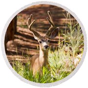 Beautiful Buck Deer In The Pike National Forest Round Beach Towel