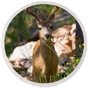 Beautiful Buck In The Pike National Forest Round Beach Towel