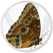 Beautiful Butterfly Wings Of Meadow Brown Isolated Round Beach Towel