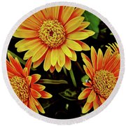 Beautiful Daisies Round Beach Towel
