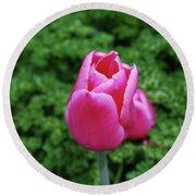 Beautiful Dark Pink Tulip Flower Blossom In A Garden Round Beach Towel
