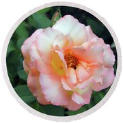 Beautiful Delicate Pink Rose On Green Leaves Background. Round Beach Towel