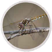 Beautiful Dragonfly Round Beach Towel