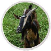 Beautiful Face Of A Billy Goat With Tan And Black Silky Fur Round Beach Towel