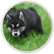 Beautiful Face Of A Black And White Alusky Puppy Round Beach Towel