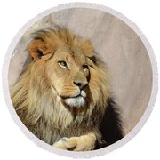 Beautiful Face Of A Lion In The Warm Sunshine Round Beach Towel